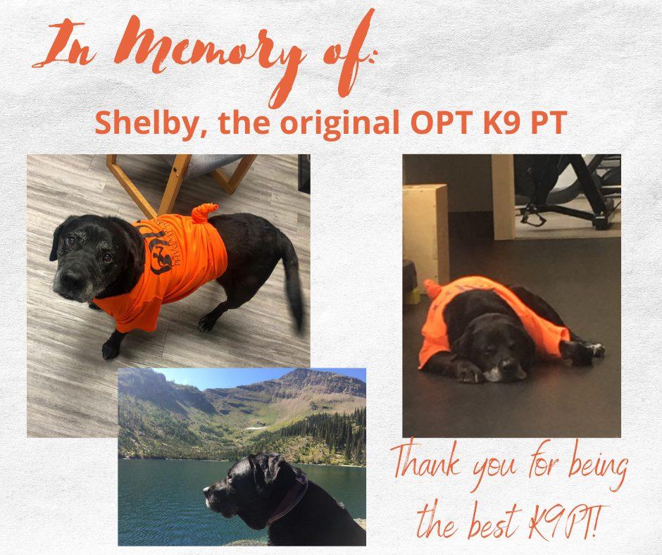 Shelby K9PT